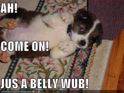 australian cattle dog bellyrub cute puppy - 1339223296