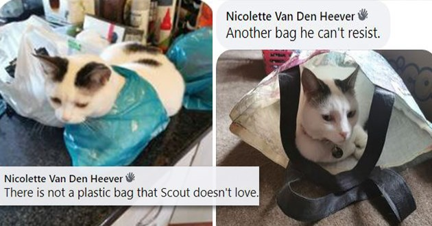 "icanhas storytime users share pics of their pets and their best ""if i fits, i sits"" pics - thumbnail of cat in bag Nicolette Van Den Heever There is not plastic bag Scout doesn't love. Another bag he can't resist"