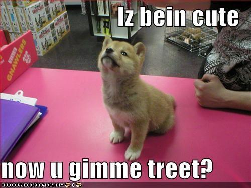 corgi cute puppy treat - 1341567744