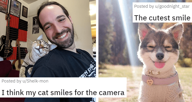 pictures and posts of animals smiling thumbnail includes two pictures including a dog smiling 'The cutest smile u/goodnight_star' and a smiling cat leaning on a guy's shoulder 'I think my cat smiles for the camera u/Sheik-mon'