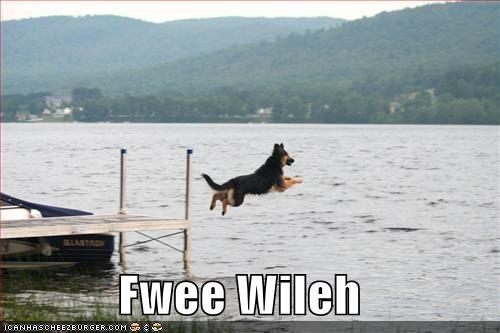 german shepherd jumping lake water - 1341617408