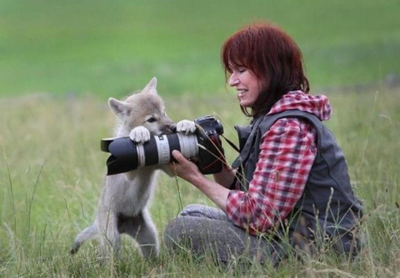 wildlife photographers get up close and personal with their subjects - thumbnail of woman and baby fox or wolf on top of her camera