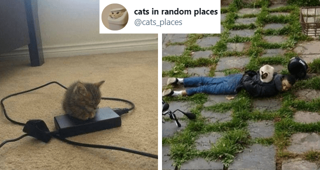 tweets of cats sitting in random places thumbnail includes two pictures including a kitten sitting on a charger and another of a cat sitting on an arrested man