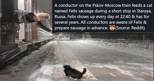 "cat memes -thumbnail includes a train conductor reaching out to a cat in the snow ""A conductor on the Pskov-Moscow train feeds a cat named Felix sausage during a short stop in Staraya, Russia. Felix shows up every day at 22:40 & has for several years. All conductors are aware of Felix & prepare sausage in advance."""