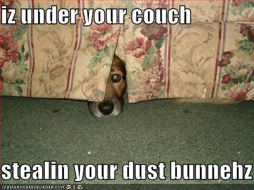 couch hiding whatbreed - 1342099712