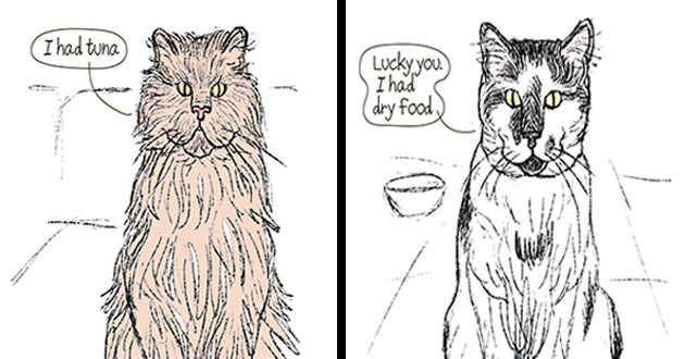 cats discuss their recent meals via video call - thumbnail includes two images of cats talking about what they ate