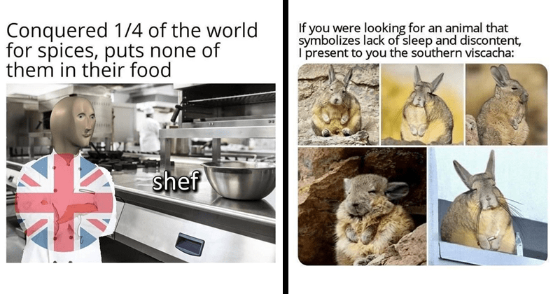 Funny random memes, nerdy memes, dank memes, relatable memes, dungeons and dragons, history memes | Conquered 1/4 world spices, puts none them their food shef Britain | if were looking an animal symbolizes lack sleep and discontent present southern viscacha