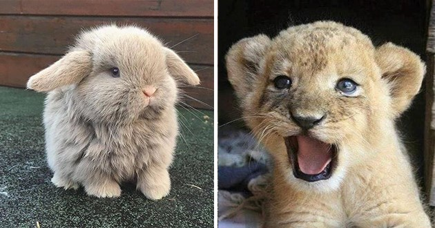cute photos of adorable animals - thumbnail includes two baby animals - one of a fluffy bunny and one of a baby lion