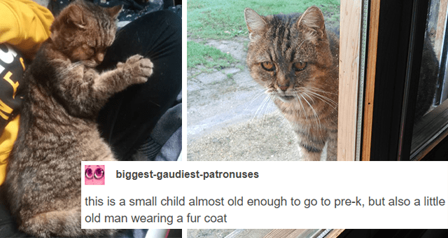 tumblr thread about a senior cat that looks like a human | biggest-gaudiest-patronuses Follow this is small child almost old enough go pre-k, but also little old man wearing fur coat