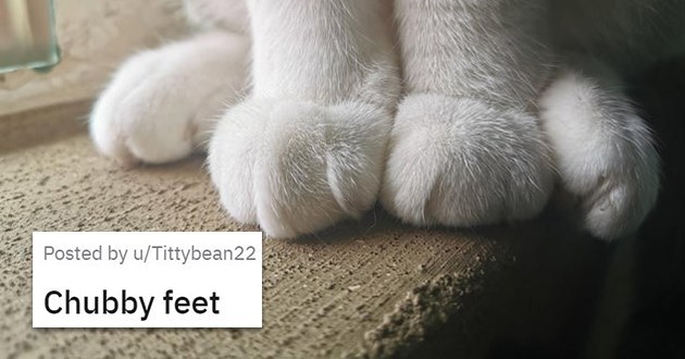 "list of kitty ankles called kankles - thumbnail of cat feet ""chubby feet"""