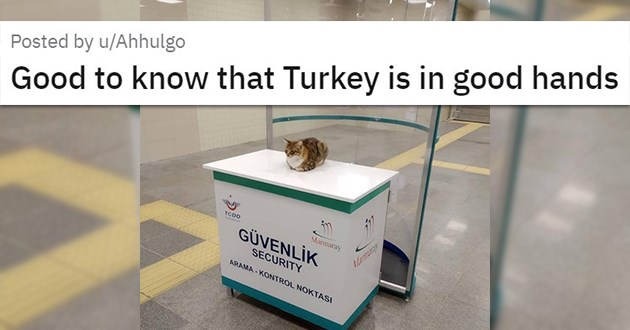 "cat medley filled with cuteness, laughs, rescues - thumbnail of cat where security should be ""Good to know that Turkey is in good hands"""