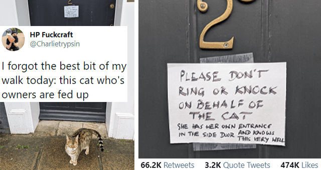viral tweets of cat owners who are fed up with their cats thumbnail includes a picture of a cat in front of a door with a note on it and a tweet 'Organism - HP Fuckcraft 000 @Charlietrypsin I forgot the best bit of my walk today: this cat who's owners are fed up PLEASE DON'T RING OR KNOCK ON BEHA LF OE THE CAT SHE MAS HER ONN ENTRANCE IN THE SIDE DR AND KND WI THIE VERY WELL5:16 PM Jan 13, 2021 Twitter for Android 66.2K Retweets 3.2K Quote Tweets 474K Likes'