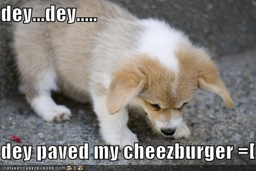 Cheezburger Image 1343565056