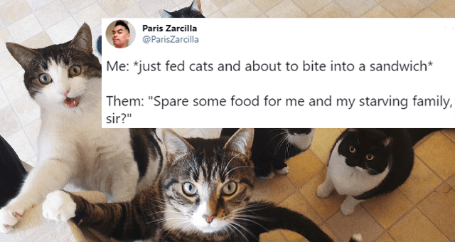 "this week's collection of cat tweets thumbnail includes a picture of a group of cats meowing 'Organism - Paris Zarcilla 000 @ParisZarcilla Me: *just fed cats and about to bite into a sandwich* Them: ""Spare some food for me and my starving family, sir?"" 5:31 PM · Jan 16, 2021 · Twitter for Android 7.3K Retweets 269 Quote Tweets 56.2K Likes'"