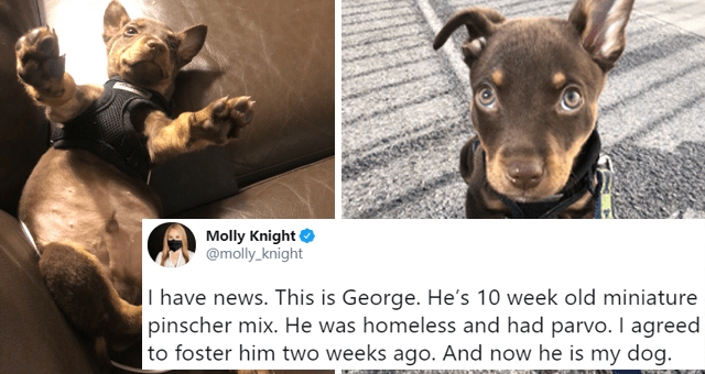 viral twitter thread about a sick miniature puppy getting adopted thumbnail includes two pictures of a miniature puppy and a tweet 'Dog breed - Molly Knight @molly knight I have news. This is George. He's 10 week old miniature pinscher mix. He was homeless and had parvo. I agreed to foster him two weeks ago. And now he is my dog. 11:35 PM Jan 18, 2021 - Twitter for iPhone 2.8K Retweets 580 Quote Tweets 98.3K Likes'