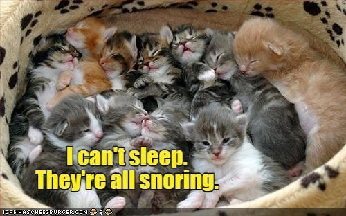 "ichc original cat memes lolcats - thumbnail of a bunch of kittens sleeping except one ""I can't sleep. They're all snoring"""