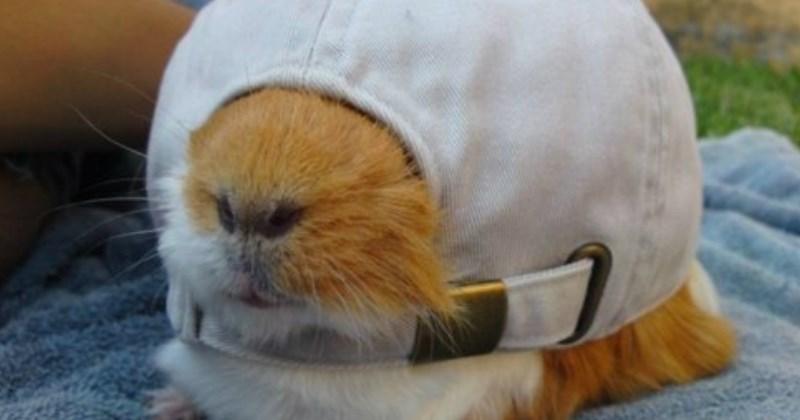 list hats cute animals - 1344005