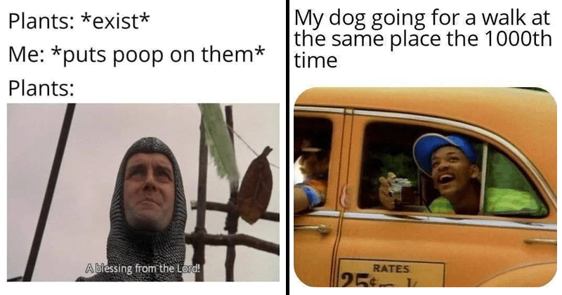 Funny random memes and tweets | Plants exist puts poop on them Plants blessing Lord! | My dog going walk at same place 1000th time Will Smith fresh prince of bel air