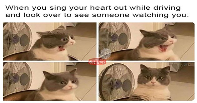 "weeks hottest and newest cat memes - thumbnail of 4 panels of a cat yawning and looking shocked ""When you sing your heart out while driving and look over to see someone watching you"""
