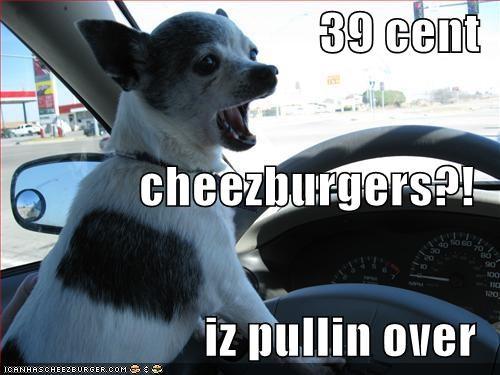 Cheezburger Image 1345045248