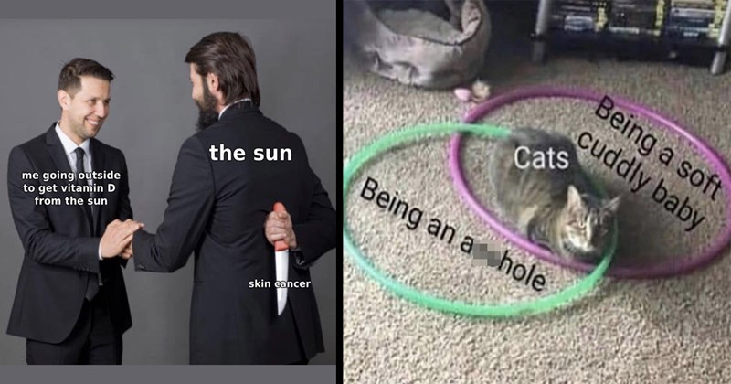 random memes, meme dump, funny memes, dank memes, stupid memes, relatable memes, dumb memes, shitposts, twitter memes, tumblr memes, memes, funny, lol, funny tweets | sun going outside get vitamin D sun skin cancer | Being soft cuddly baby Cats Being an asshole venn diagram with hula hoops