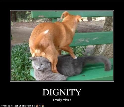 bench dignity lolcats whatbreed - 1345782528