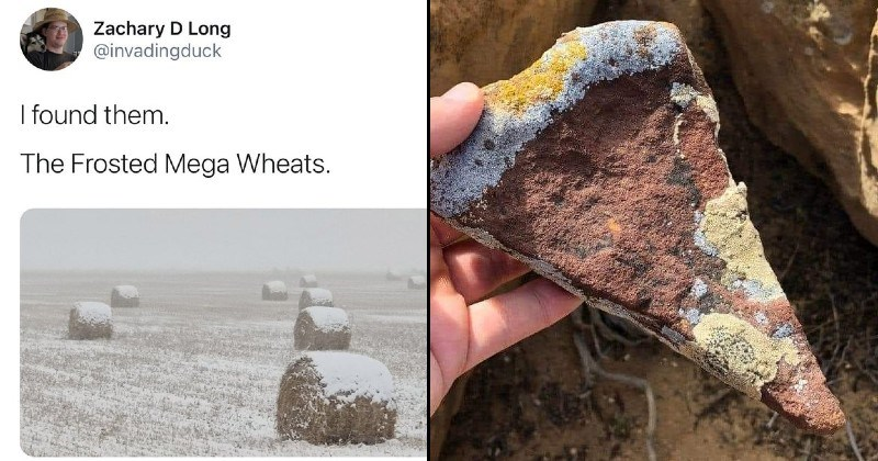 things that look like food but aren't | Zachary D Long @invadingduck found them Frosted Mega Wheats. | forbidden pizza rock shaped like a pizza slice triangle with crust