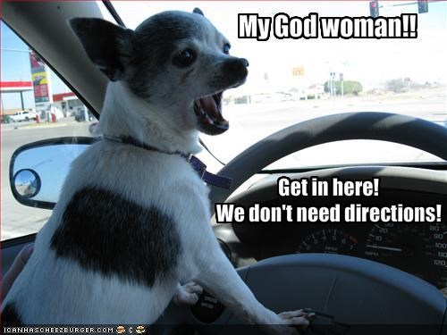 chihuahua directions driving hurry - 1346097408