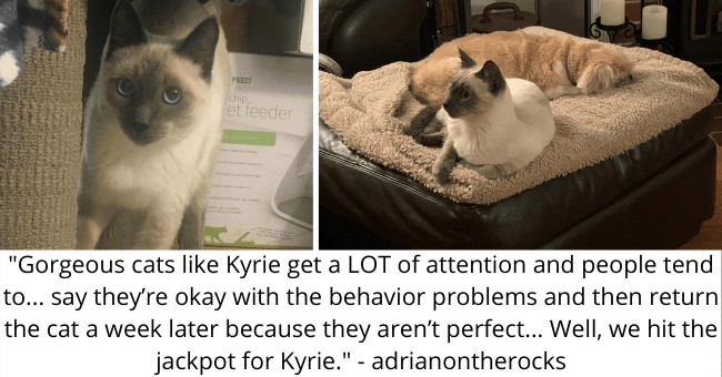 "viral imgur thread about a cat with behavioral issues getting adopted thumbnail includes two pictures including a kitten and another of a cat and a dog cuddling '""Gorgeous cats like Kyrie get a LOT of attention and people tend to... say they're okay with the behavior problems and then return the cat a week later because they aren't perfect... Well, we hit the jackpot for Kyrie."" - adrianontherocks'"
