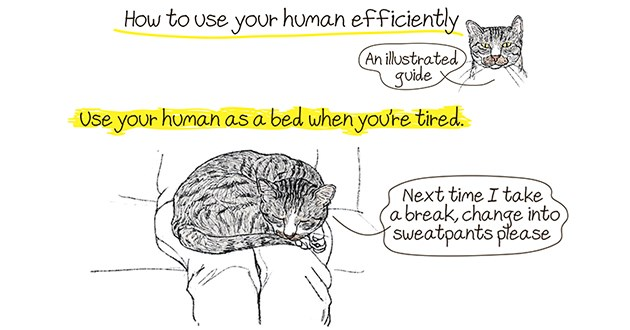 how to use her human efficiently - thumbnail of cat using human lap as a bed | use human efficiently An illustrated guide Use human as bed tired. Next time take a break, change into sweatpants please