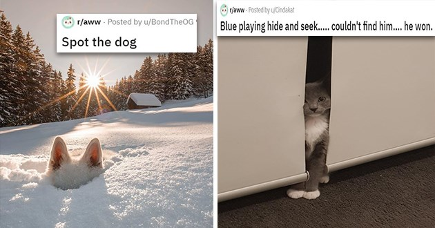 "cats and dogs who are bad at hiding - thumbnail of cat hiding behind door Blue playing hide and seek..... couldn't find him.... he won | dog ears popping out of snow ""spot the dog"""
