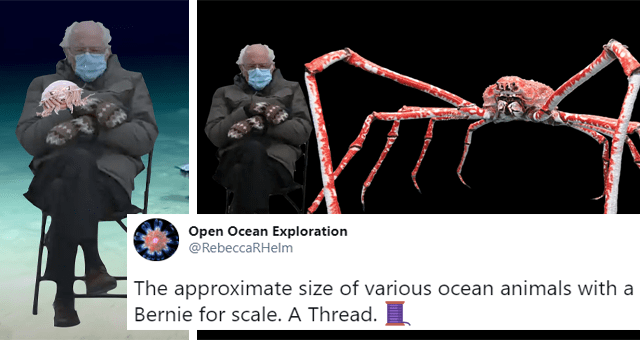 viral twitter thread about ocean animals again Bernie Sanders for scale thumbnail includes two pictures of Bernie Sanders wearing mittens including one where he's next to a giant crab and another where he's holding a jellyfish 'Human body - Open Ocean Exploration @RebeccaRHelm 000 The approximate size of various ocean animals with a Bernie for scale. A Thread. 5:14 AM - Jan 22, 2021 Twitter Web App 9K Retweets 1.9K Quote Tweets 31.9K Likes'