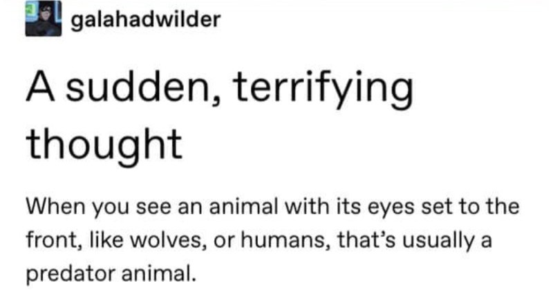 Tumblr goes all the way in on why dragons have their eyes where they do. | galahadwilder sudden, terrifying thought see an animal with its eyes set front, like wolves, or humans s usually predator animal.