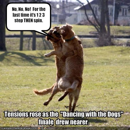 dancing golden retriever - 1347543808