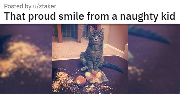 "cat medley filled with cuteness, laughs, rescues - thumbnail of cat smiling next to mess ""That proud smile from a naughty kid"""