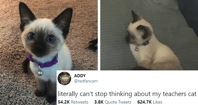 viral tweets about a Siamese kitten thumbnail includes two pictures of a Siamese kitten and a tweet 'Cat - ADDY ... LITE @tedfancam literally can't stop thinking about my teachers cat 11:21 PM Jan 21, 2021 · Twitter for iPhone 54.2K Retweets 3.8K Quote Tweets 624.7K Likes'