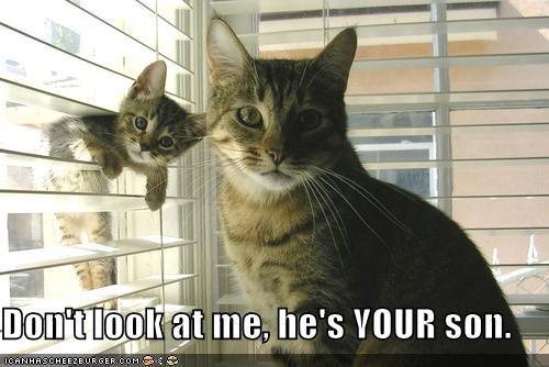 blinds cute kitten lolcats lolkittehs mischief momcat - 1347692288