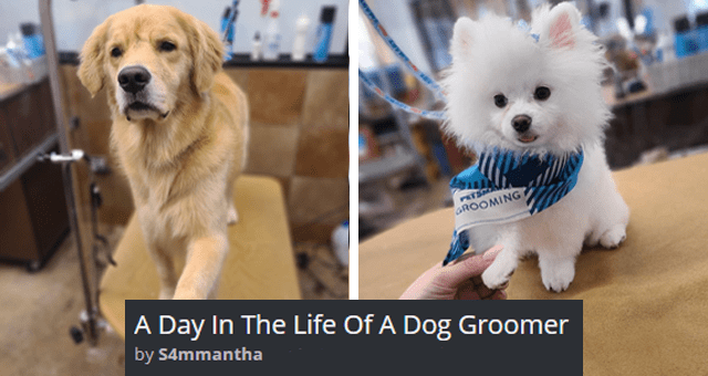 viral imgur thread about a day in the life of a dog groomer thumbnail includes two pictures of dogs shaking paws with a person ''Day in the life of a dog groomer S4mmantha'