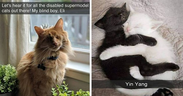 "fresh cat snaps - thumbnail includes two cat snaps - one picture of a gorgeous blind cat "" Let's hear it for all the disabled supermodel cats out there! My blind boy, Eli"" and another of a white kitten snuggling with a black kitten ""yin yang"""
