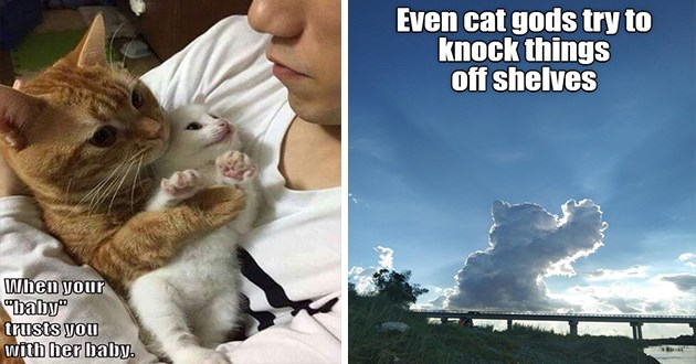 """ichc original cat memes lolcats - thumbnail includes two cat memes - one of a cat holding a kitten """"when your """"baby"""" trust you with her baby."""" and one of a clouds that look like a cat """"even cat gods try to knock things off shelves"""""""