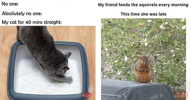 "i can has cheezburger new instagram page full of original funny memes and more - thumbnail of two memes - one of a cat in the litter box "" no one: absolutely no one: my cat for 40 mins straight:"" and an angry squirrel ""my friend needs the squirrels in the morning. Today she was late"""