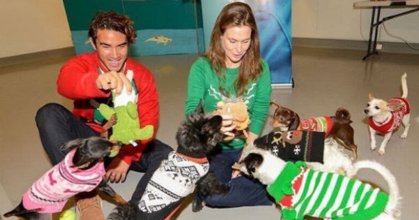 shelter sweater animals holidays rescue - 1349125