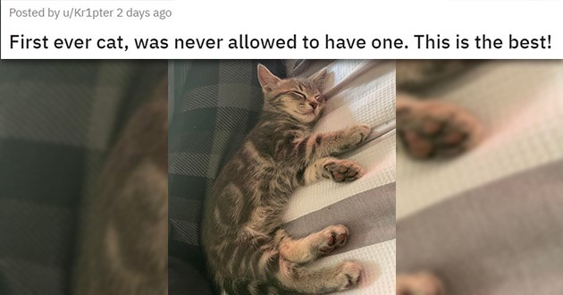 "all the newly adopted rescue animals of the week - thumbnail of sleepy kitten ""First ever cat, was never allowed to have one. This is the best!"""