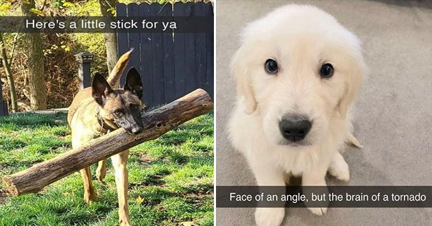 """uplifting pure and wholesome dog snapchats - thumbnail of dog with a giant stick """"here's a little stick for ya"""" and a small puppy """"face of an angel but the brain of a tornado"""""""