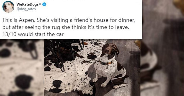 "list of this years newest dog rates - thumbnail of dog beside rug with same fur pattern ""This is Aspen. She's visiting a friend's house for dinner, but after seeing the rug she thinks it's time to leave. 13/10 would start the car"""