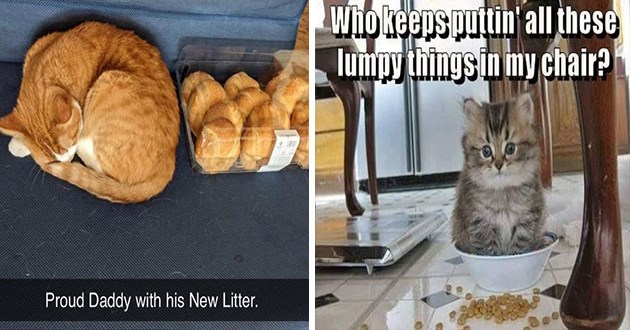 "weeks hottest and newest cat memes - thumbnail includes two cat memes - one of orange cat sleeping next to baked goods ""proud daddy with his new litter"" and one of a kitten sitting inside its food bowl ""who keeps puttin' all these lump things in my chair?"""