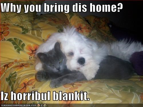 blanket,dogs,horrible,lolcats,loldogs,yuck