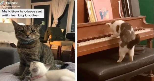 most viral and adorable cat videos trending on instagram - thumbnail includes two images - a kitten looking up adoringly at older cat and a cat playing piano