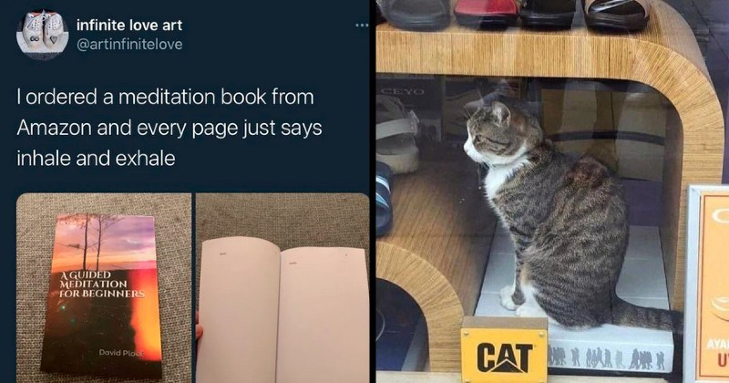 jokes and memes that aren't factually accurate but are technically correct | infinite love art @artinfinitelove T ordered meditation book Amazon and every page just says inhale and exhale GUIDED MEDITATION BEGINNERS | real cat next to CAT brand shoes