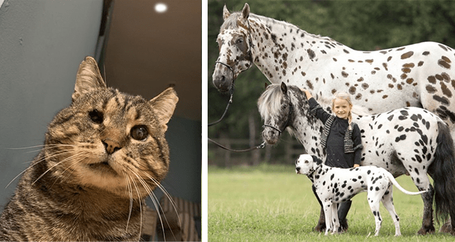 collection of the most positive animal news stories of January thumbnail includes two pictures including one of a blind cat and another of a horse a dog and a pony who all have the same looking spots